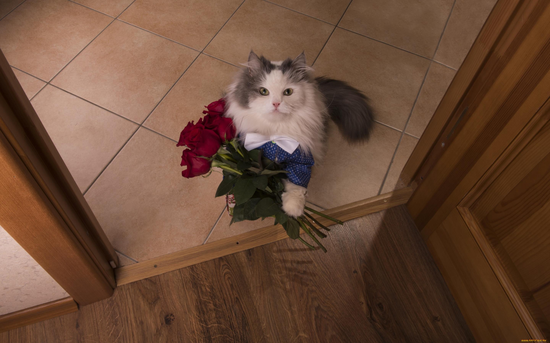 виде смешные фото с цветами с днем рождения семейного фотографа